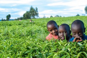 kids in tea field (2)